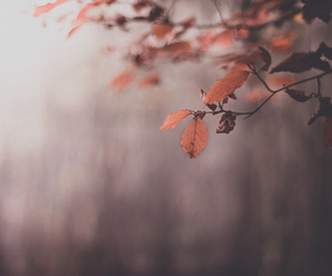 leaves, nature, and photography image