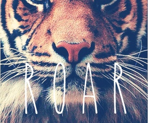 roar, tiger, and animal image