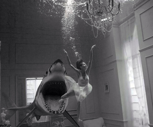 shark, water, and black and white image