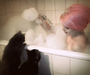 cats, girl, and scene image