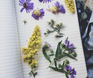 autumn, book, and spring image