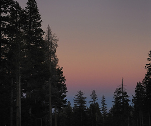 moon, tree, and sunset image
