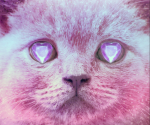 cat, pink, and diamond image