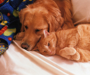 cat and dog image