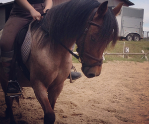 heart, lesson, and riding image