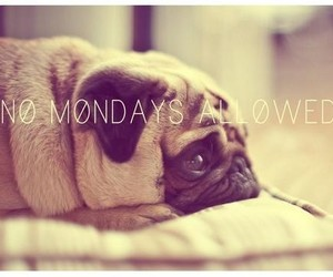 dog, cute, and monday image