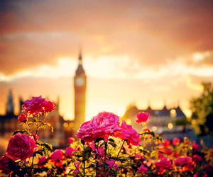 london, pink, and rose image
