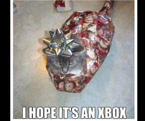 cat, funny, and christmas image