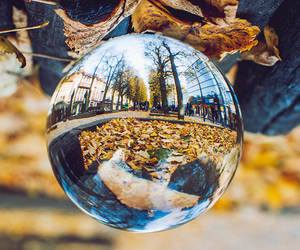 autumn, natural, and photography image