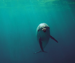 dolphin, photography, and ocean image