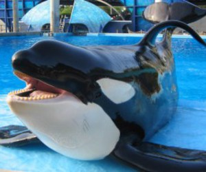 whale and sea world image