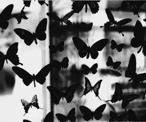 black, boys, and butterflies image
