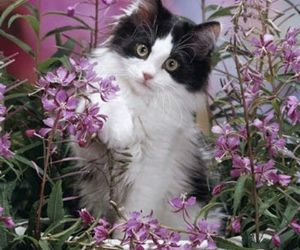 cat, kitty, and flowers image