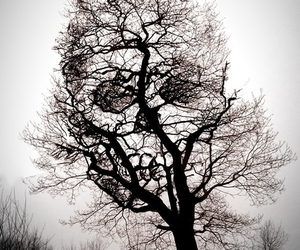 dark, spooky, and tree image