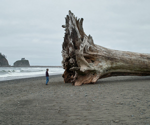 tree, beach, and nature image