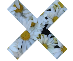 flowers, overlay, and x image