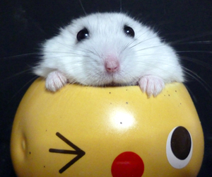 Animales, hamster, and tierno image