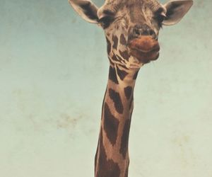 animal, tumblr, and giraffe image
