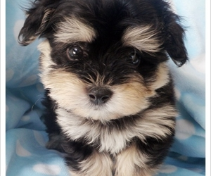 cute puppy, doggie, and dog image