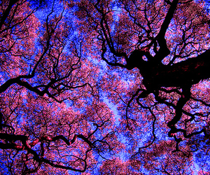 tree, pink, and blue image