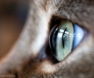 cat, close up, and kitty image