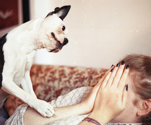 dog, pets, and funny image