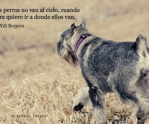 baby, dog, and espanol image