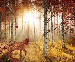fox, forest, and sun image