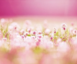 flowers, meadow, and pink image