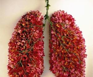 adorable, lovely, and lungs image