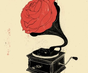 rose, flower, and music image