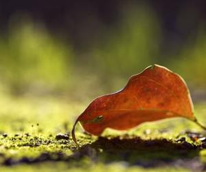autumn, landscape, and leaves image