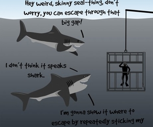 funny and shark image