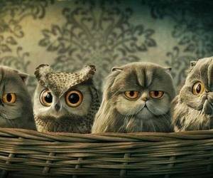 owl, cat, and art image