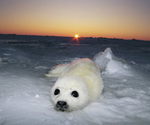 animals, baby animals, and seal image