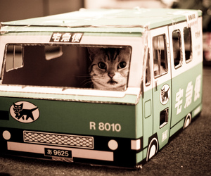 cats, funny cat, and green image