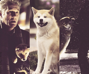 hachi, hachiko, and richard gere image