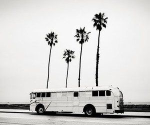 bus, black and white, and palms image