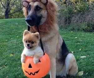 boo, dogs, and Halloween image