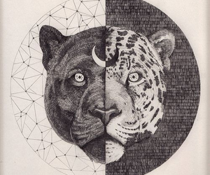 art, animal, and moon image