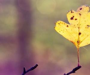 autumn, leaves, and makro image