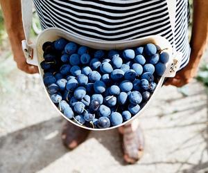 fruit, photography, and blueberry image