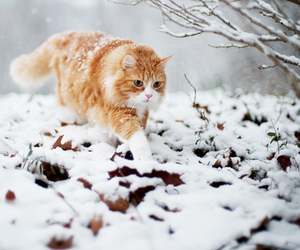 cat, snow, and photography image