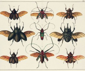 beetles and curiosities image