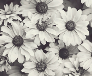 amazing, black and white, and floral image