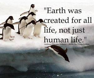 life, earth, and animals image
