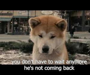 dog, sad, and hachiko image