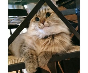 cats, fat, and cute image