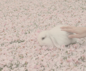 flowers, cute, and rabbit image