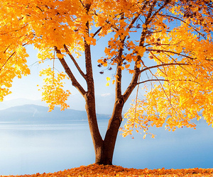 amazing, color, and fall image